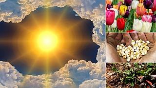 Předpověď počasí na první květnový víkend: Co dělat na zahradě