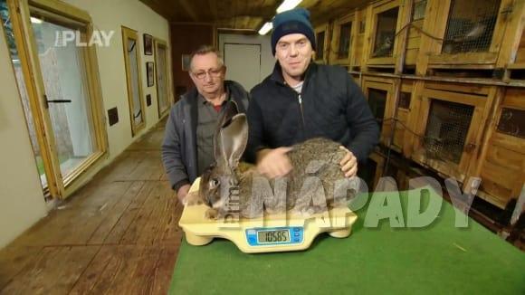 Chov obřích králíků