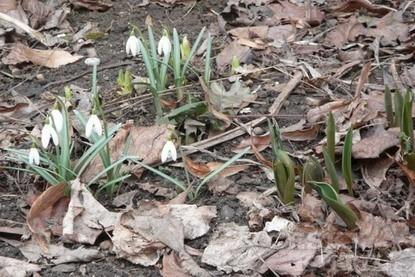 Tak už je tu první jarní den