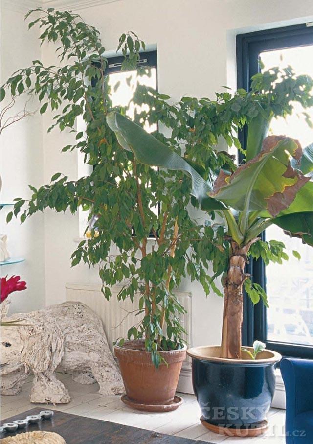 Aby se nádobovým rostlinám dařilo