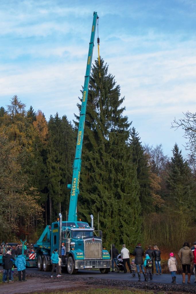 Vánoční strom pro Prahu kácela jedna z největších motorových pil v ČR
