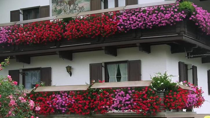 Jak na květiny vysazené v truhlících