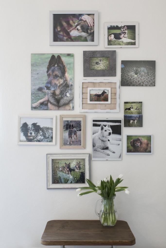 Úprava rodinného domu pro smečku psů a jejich majitelku - Jak se staví sen