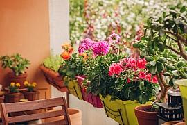 Kvetoucí truhlíky k zavěšení