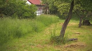 Sekání trávy kosou pro zvyšování biodiverzity