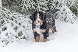 Péče o psa v zimních měsících: Někomu vyhovuje bouda a jinému teplý kabátek