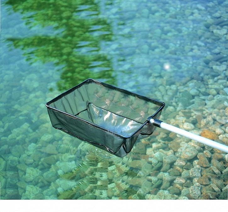Zelená voda v jezírku