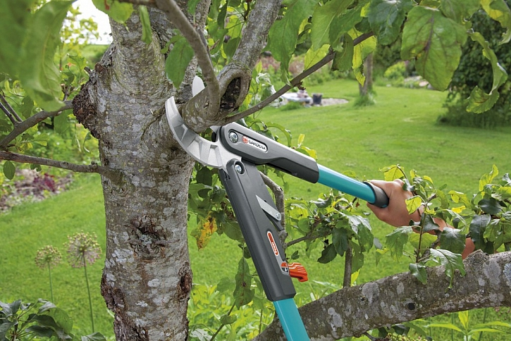 10 tipů na jarní prořez ovocných stromů: