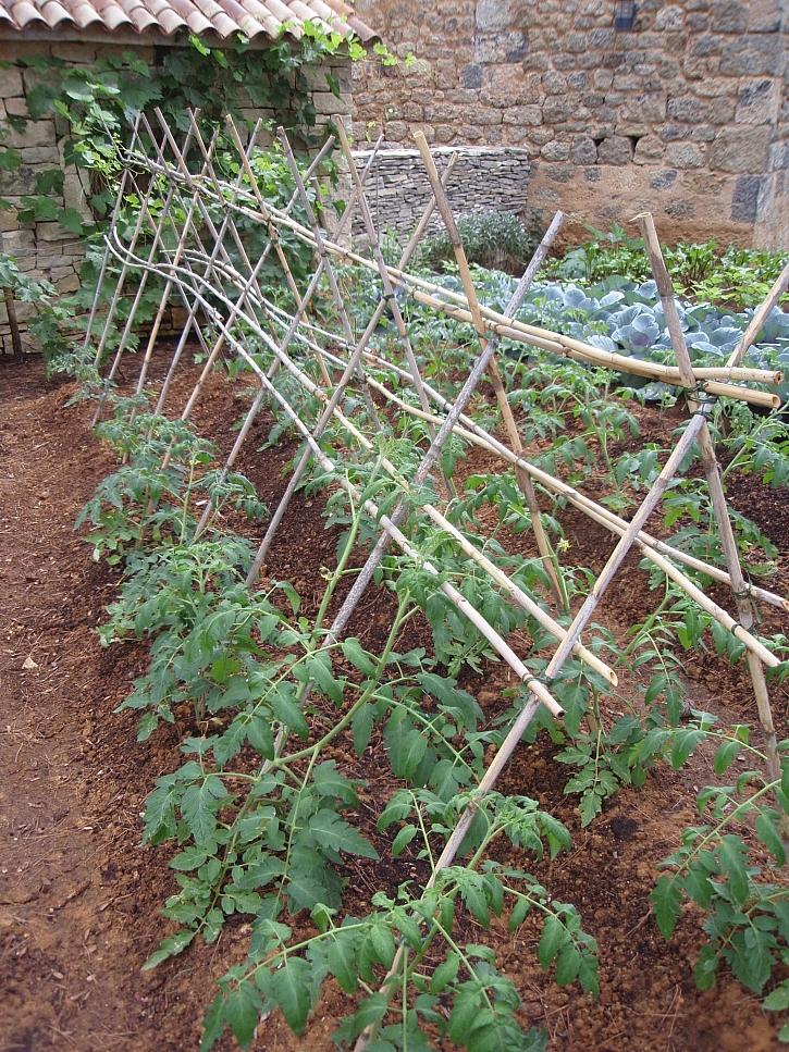 Rajčatový stan