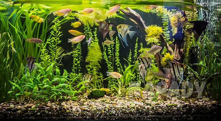 Vícedruhové akvárium je do bytu nejvhodnější (Zdroj: Depositphotos)