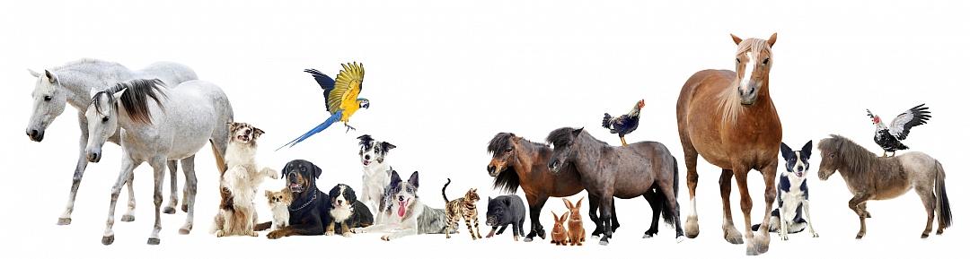 obrázek tématu: Chováme zvířata
