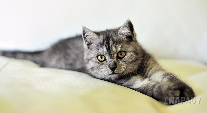 Prevence zdravotních problémů koček