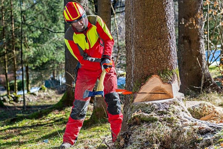 Pravidla pro řezání stromů platí pro fyzické i pro právnické osoby