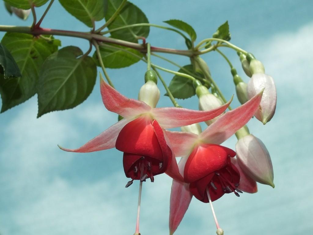 Fuchsie i bylinky najdete v Mělníce aneb pozvánka na zajímavou akci