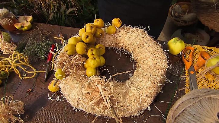 Ozdobení plody kdoulovce