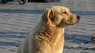 6 kroků, co dělat, když najdete zmateného volně pobíhajícího psa