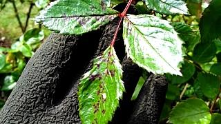 Houbová onemocnění rostlin