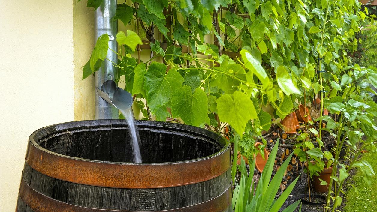 Nenechávejte odtékat dešťovou vodu jen tak: Můžete s ní zalévat zahradu, ale i splachovat záchod