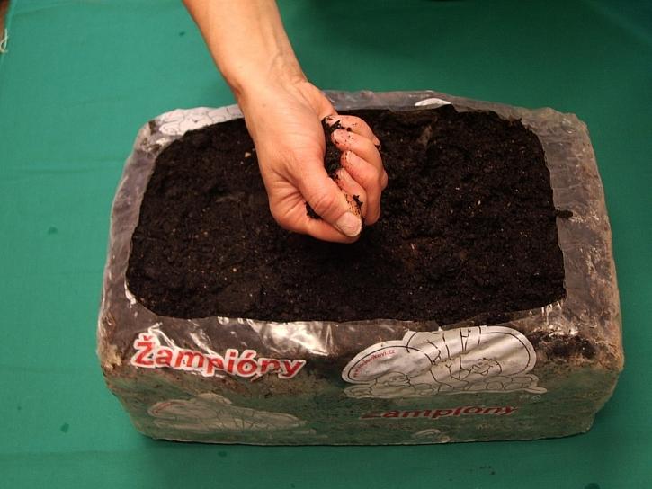 Krycí zeminu navlhčete tak, aby z ní po stlačení v dlani vyteklo několik kapek vody. Takto vlhkou ji udržujte neustále