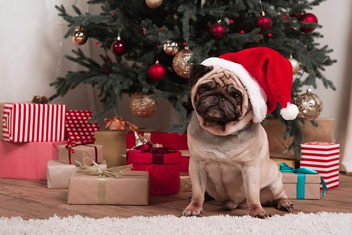 Na vánoce nezapomínáme ani na dárky pro zvířata (Zdroj: Depositphotos)