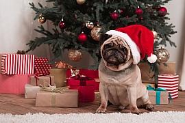 Jaké dárky nadělit domácím mazlíčkům pod stromek?