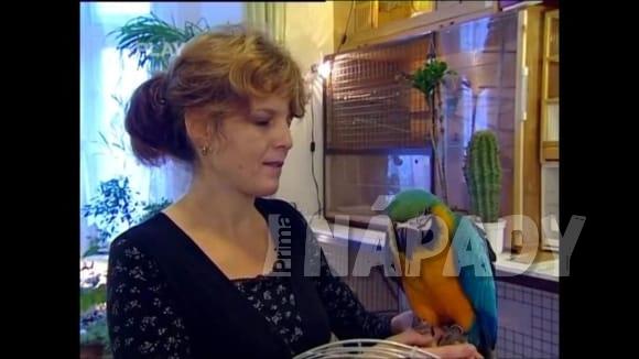 Výběr papouška