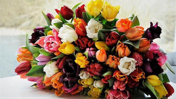 Aby kytice vydržela dlouho krásná: oblíbené tulipány (Tulipa)