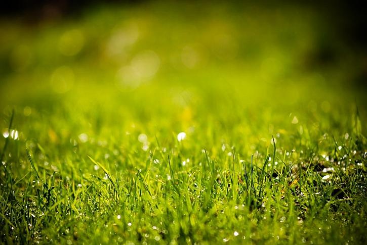 Zalévaný trávník