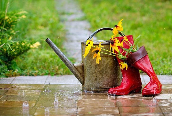Svod dešťové vody: jak na zachycení vláhy pro zahradu (Zdroj: Depositphotos)