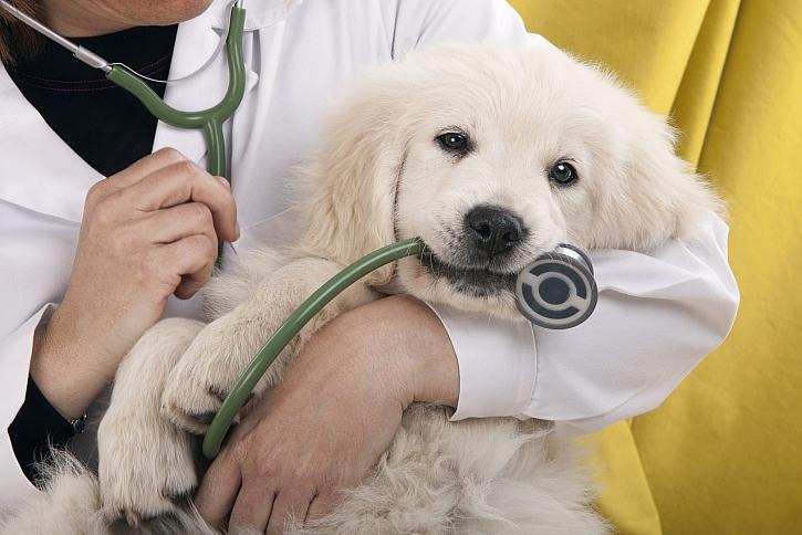 Víte, jak odnaučit psa strachu z veteriny? (Zdroj: Depositphotos)