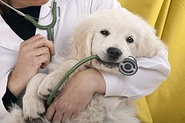 Máte bojácného pejska, co má strach z veteriny? Odnaučte ho to.