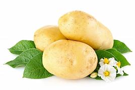 Není nad vlastní brambory