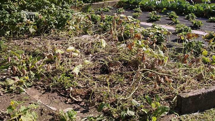 Kompost a organické hnojení