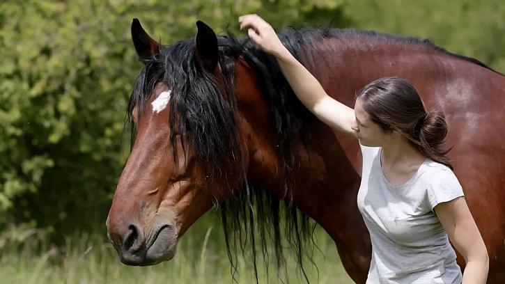 Očkování a odčervování poněkud větších čtyřnohých mazlíčků – koní