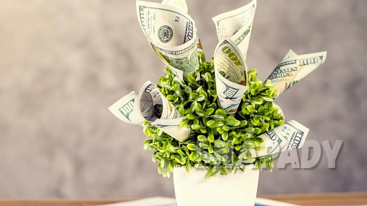 Peníze v květináči