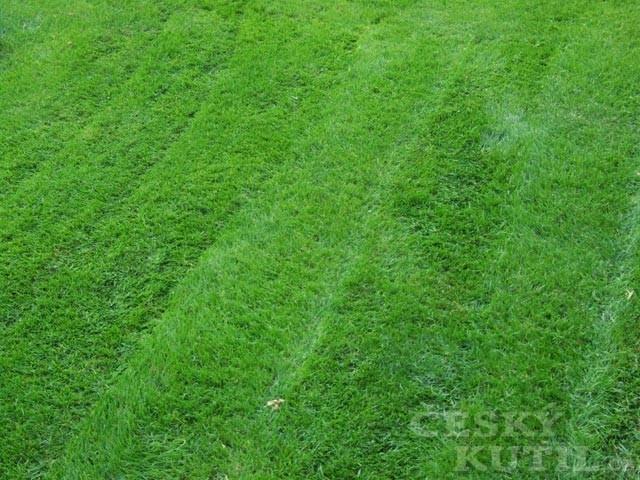 Zakládáme trávník