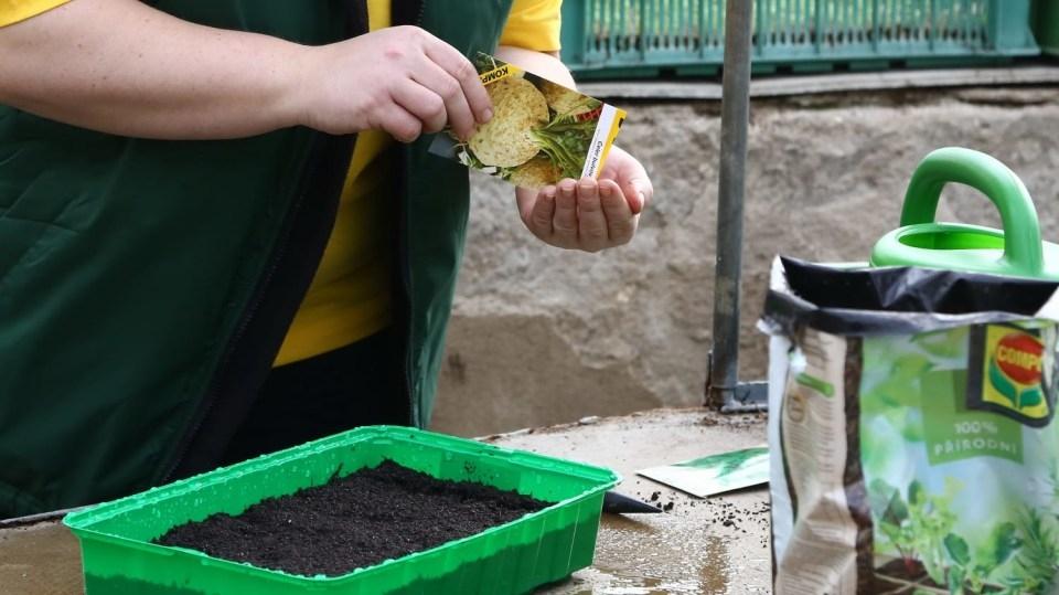 Jarní výsev: Doma ive skleníku