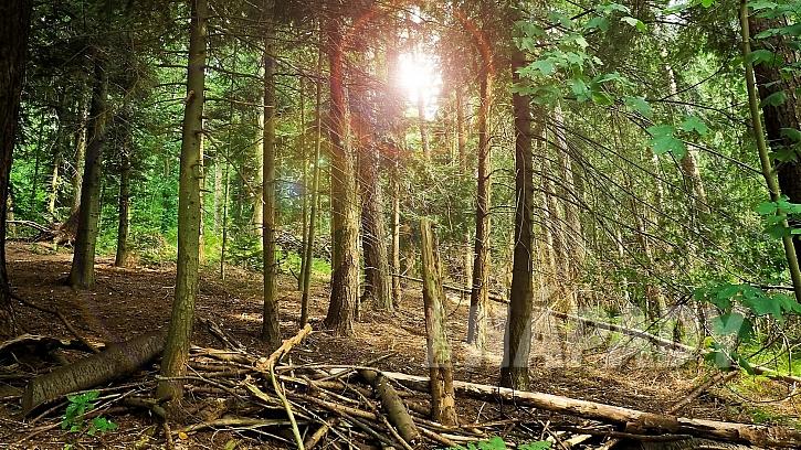 Nápady na dekorace z přírodnin: nejrůznější klacíky a suché větve stromů jsou jako materiál prima