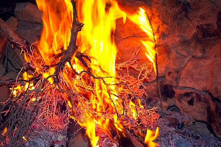 Je lepší silně napadené rostliny spálit, tím zaručíme, že se americké padlí nebude šířit dál.