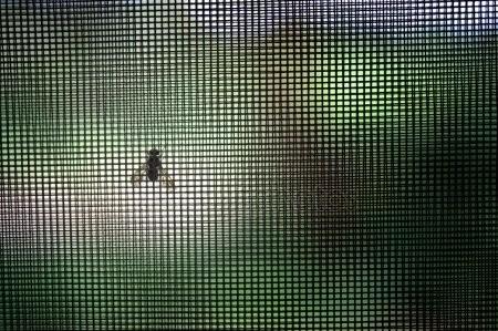 Okenní sítě spolehlivě zastaví velké procento nezvaného hmyzu
