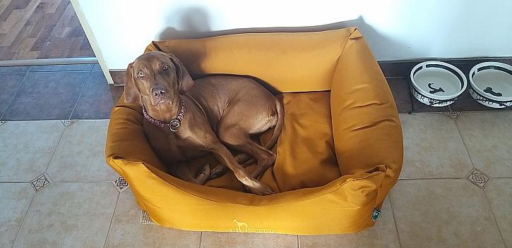 Pes, který je správně naučený ví, že má své místo na čůrání venku (Zdroj: Šárka Miškovská)