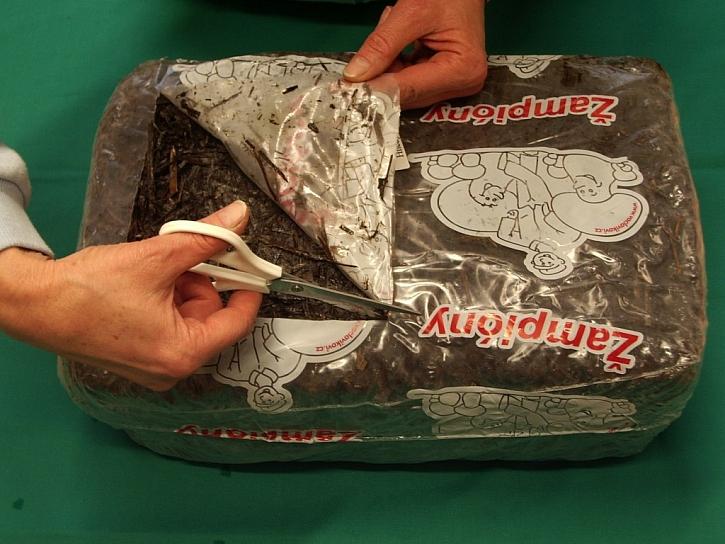 Fólii na svrchní straně podhoubím prorostlé kostky se substrátem odstraňte tak, aby u okraje zůstal asi 3 cm vysoký lem