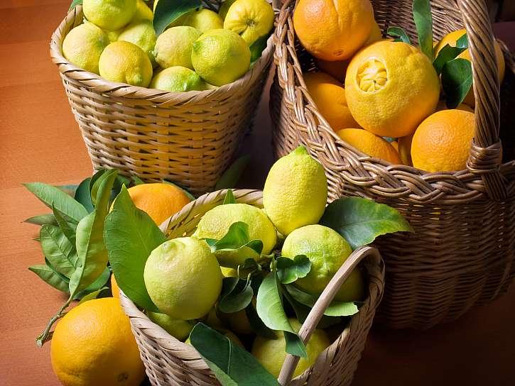 Sklízíme vlastní citrusy