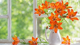 Užijte si lilie i doma bez bolesti hlavy a pylových skvrn