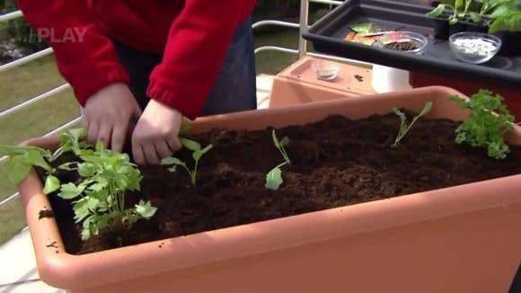 Pěstování zeleniny na balkoně