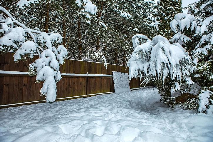 Osvojte si jednoduché zásady pro péči a zalévání dřevin v zimě (Zdroj: Depositphotos)