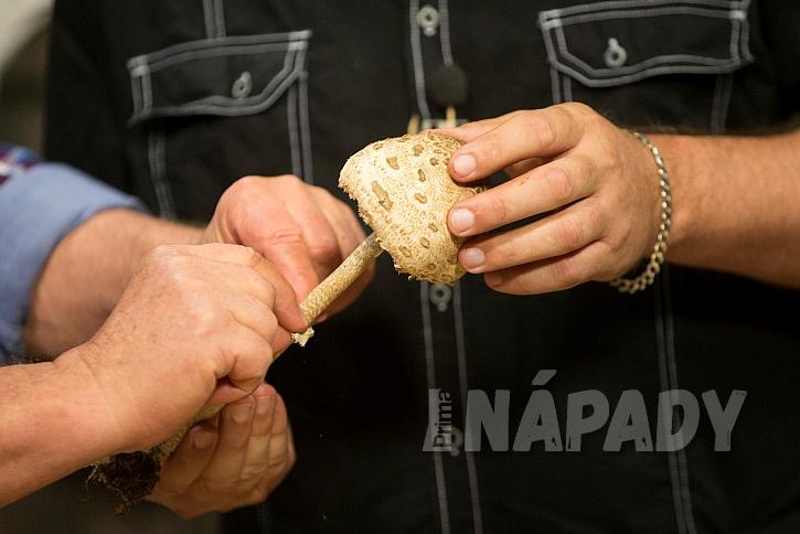Podzimní houby jedlé, nejedlé i jedovaté 4