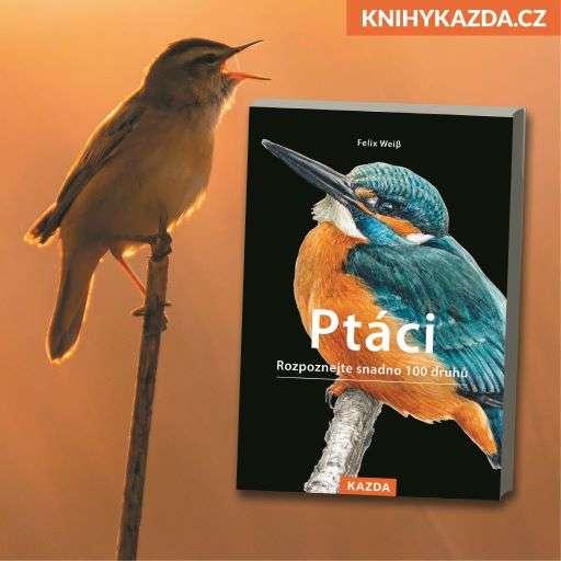 Poznejte přes 100 druhů středoevropských opeřenců v publikaci od Felixe Weiβe – Ptáci