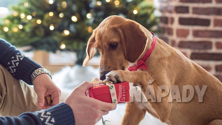 Jaký vánoční dárek by si asi přál váš pejsek?