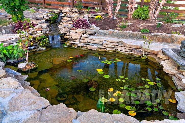 Květiny vhodné k zahradnímu jezírku (Zdroj: Depositphotos.com)